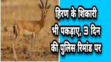 Photo of ujjain- हिरण के शिकारी भी पकड़ाए, तीन दिन की रिमांड पर